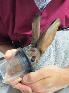 Induction anesthésie gazeuse au masque