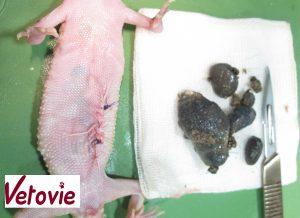 Fecalome retiré gecko