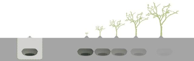 cercueil-ecologique-640
