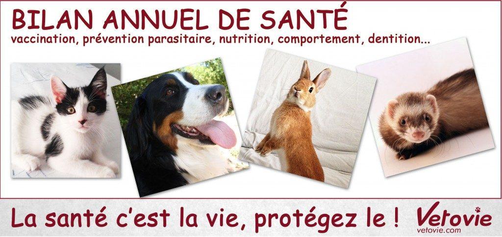 Bilan annuel de santé de votre animal